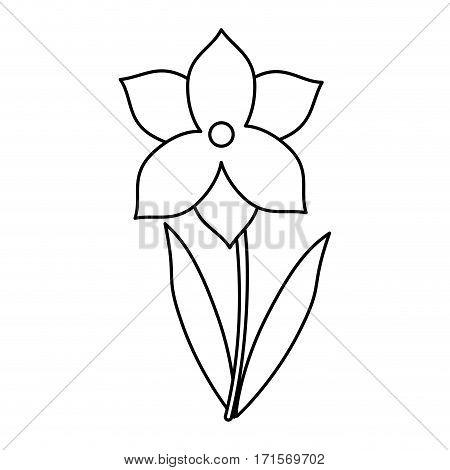narcissus flower spring season thin line vector illustration eps 10