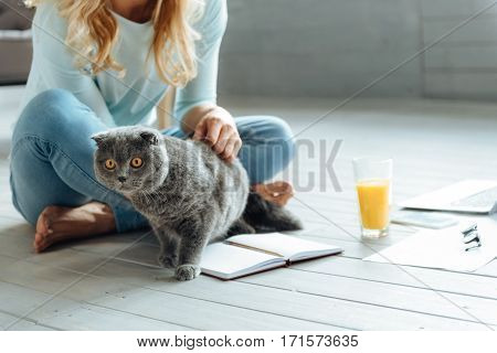 My dear pet. Close up of young delighted pretty woman petting a cat and drinking juice while sitting in a living room with a book.