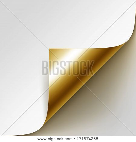 Vector Curled Golden Corner of White Paper with Shadow Mock up Close up Isolated on White Background