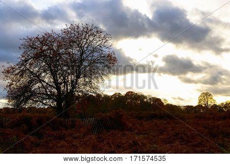 Autumn Scene In Richmond Park London