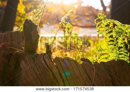 Sunlight Rays Pouring Through Fern
