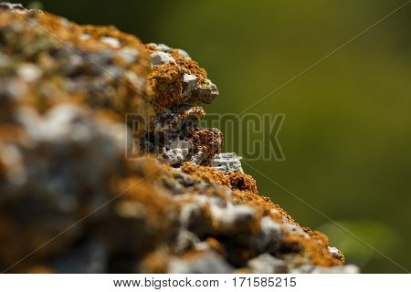 Gray stone with red lichen on blurred background