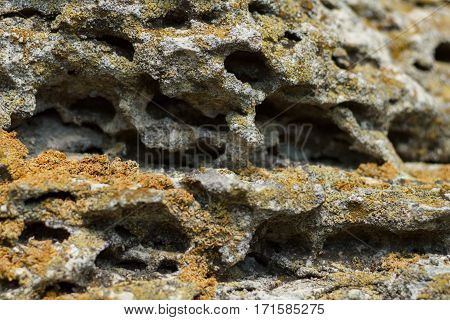 Gray porous stone with red lichen close-up