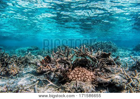 Underwater coral reef and fish in Indian Ocean, Maldives. Tropical clear turquoise water