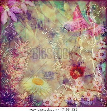 Vintage floral background with Australian flora including grevillea, flannel flowers, paper daisies, Sturts Desert Rose and gumtree blossoms. Photo montage on textured background. Copy space for text.