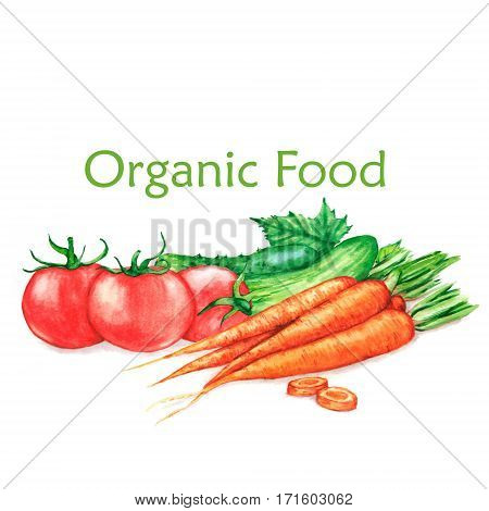 Hand-drawn watercolor food illustration of organic products: fresh vegetables - tomatoes, carrots, cucumbers, isolated on the white background