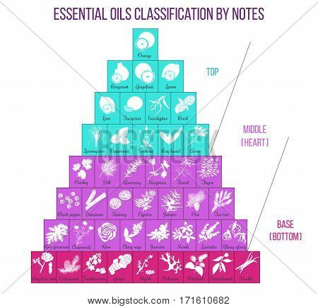 Aromatherapy and essential oils classification infographics. Modern vector line icons set of aromatherapy and essential oils. For cosmetics massage salon spa health care store perfume advertising