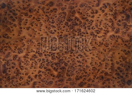 Very high resolution burl root wood texture