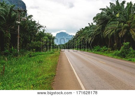 Asphalt Road Though The Tropical Jungle, Rainforest, Krabi