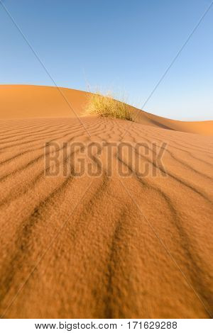 Beautiful image of typical patterns in the sand in the desert Erg Chebbi, Morocco. In the background is some grass, dunes and a beautiful blue sky.
