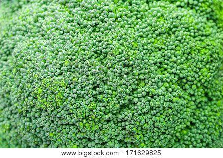 Close-up of a fresh broccoli. Healthy broccoli