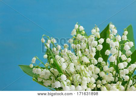 Lilly of the valley fresh flowers on blue wooden background
