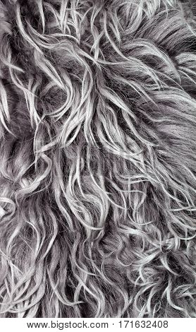 texture long wavy grey hair with white strands of gray hair
