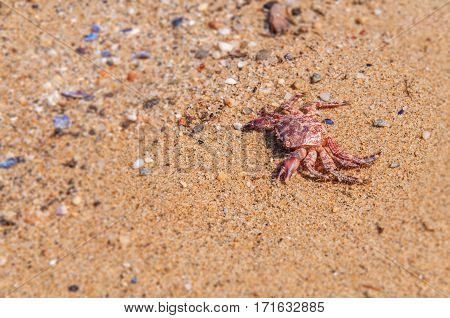 Death crab on beach close with pebble stones