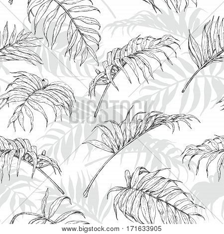 Hand drawn branches and leaves of tropical plants. Monochrome palm fronds sketch pattern. Black gray and white seamless texture.