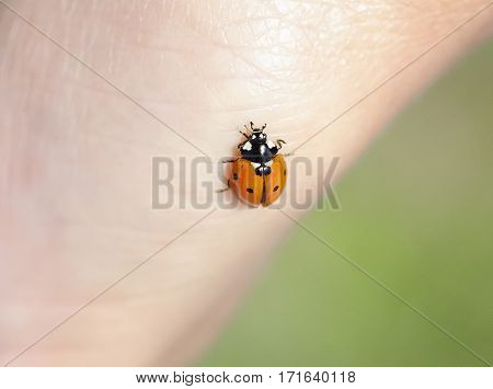 little ladybug crawling on a human hand