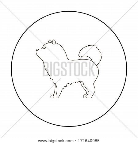 Chow-chow vector illustration icon in outline design