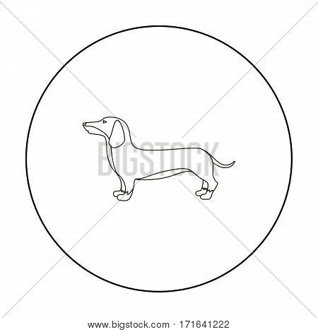 Dachshund vector illustration icon in outline design