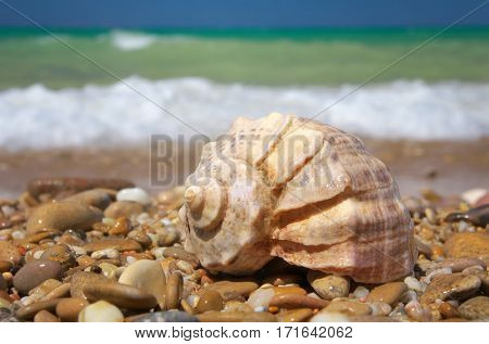 Cockleshell on the sea shore. Nature composition.