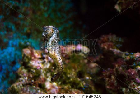Close-up of little sea horses. Beautiful sea horses