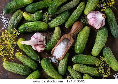 Cucumbers For Pickling