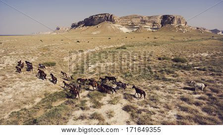 Aerial photo from flying drone of a group of thoroughbred horses on pasture in countryside with beautiful nature. Meadow with animals near big cliff rock against clear wonderful blue sky