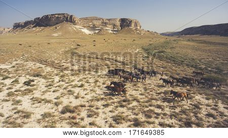 Aerial photo from flying drone of a thoroughbred horse are grazing in Texas district with beautiful steppe landscape. Meadow with animals in countryside with dry climate. Concept of care environment