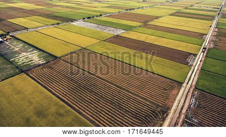 Aerial photo from flying drone of a green rice field with crops in rural area in summer season. Grown harvest with natural foods in Thailand district. Farm with cultivation of paddy