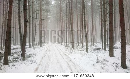 A misty forest. Natural background from wilderness. Road in snowy tundra.