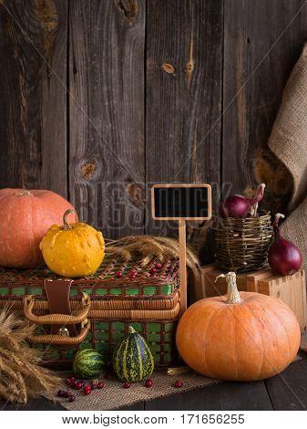 still life of pumpkins. autumn vegetable farming