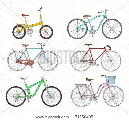 Different types: city fix highway cruiser sport mountain bike Colorful illustration