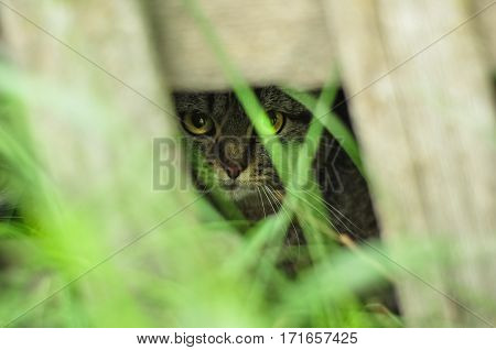 Cute Kitten Peeking Out Of The Bushes. Hiding In The Shadow And Grass.