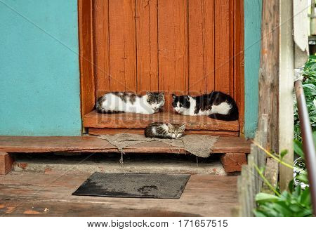 Cute Cats Lie On The Porch Of Country House. Countryside Scene. Village Life
