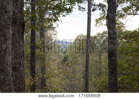Mount Driskell