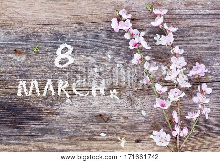 branch with cherry pink blooming flowers on aged wooden table for 8 March international womens day