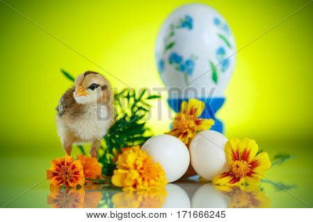 little chick with daisies on a green background
