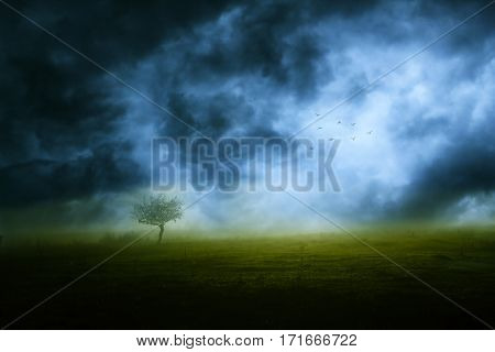 Stormy weather sky and lonely tree on green meadow
