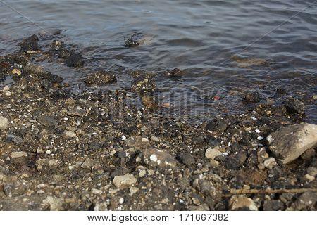 Garbage Washing On Shore