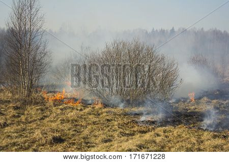 A spring fire. Burning grass. Field Smoke Background