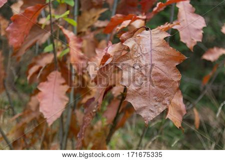 orange foilage on a tree in the forest in autumn