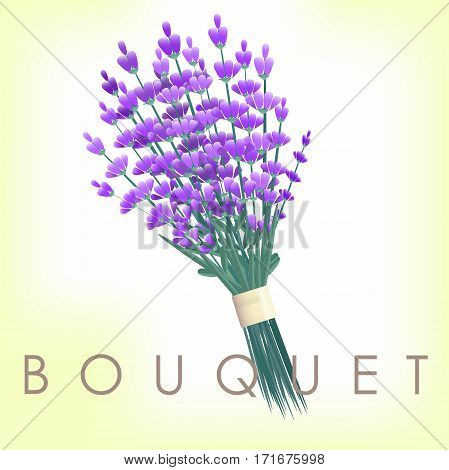 lavender bouquet vintage . Flower illustration . Wedding Floral element bunch