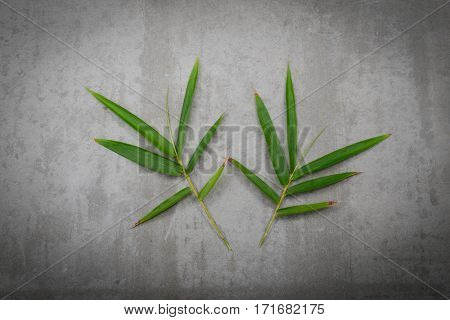 bamboo leaf-gray background