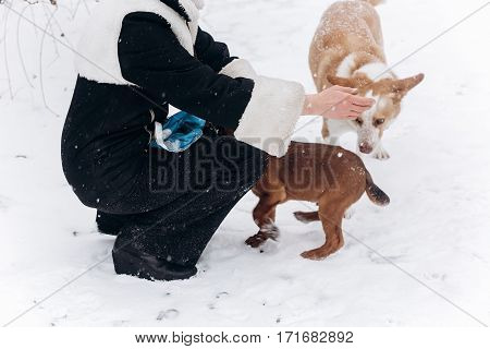 Woman Walking Out  Cute Puppy And Dog In Snowy Cold Winter Park. Moments Of True Happiness. Adoption
