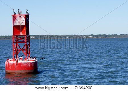 Red Buoy in the Water with Three Cormorants
