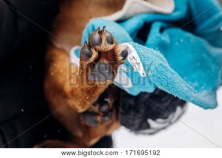 Little Puppy Paw Close Up.women Dressing Up Cute Doggy In Snowy Cold Winter Park. Adoption Concept.