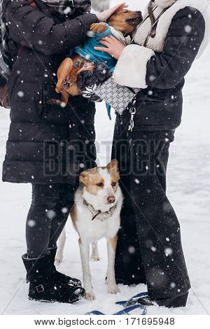 Women Dressing Up Cute Doggy And Big One Looking In Snowy Cold Winter Park. Adoption Concept. Save A