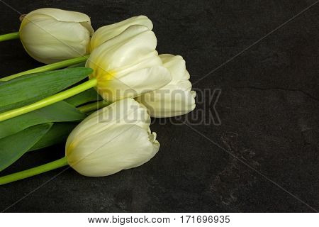 Four white tulips on arranged in the lower left corner of the old black stone table. Close flat horizontal view from top