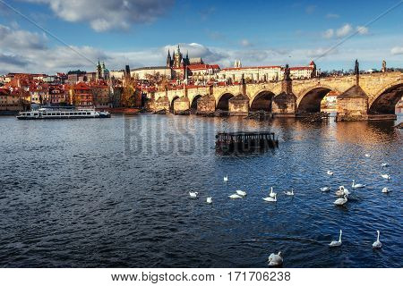 Image of Charles Bridge in Prague with couple of swans in the foreground. Czech Republic