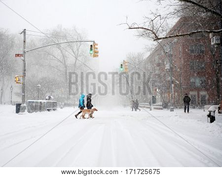 NEW YORK - FEB 9: Dog owners walk their dog across Waverly Place on February 9, 2017 in New York. Snowfall totals of approximately six inches fell in and around NYC.