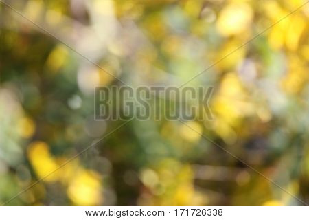 Soft Focus Yellow Floral Background 1